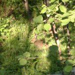 Зайцы на территории санатория Тумнин Горячий ключ